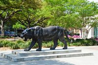 Here is a statue of the LSU Tiger.